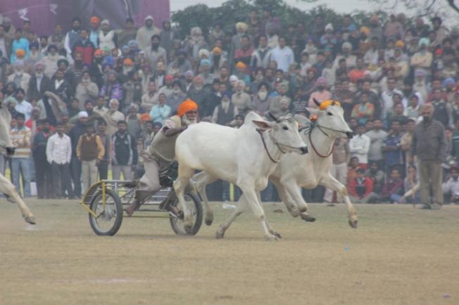 Kila Raipur Sports Festival IMG_8646_Anurag Mallick