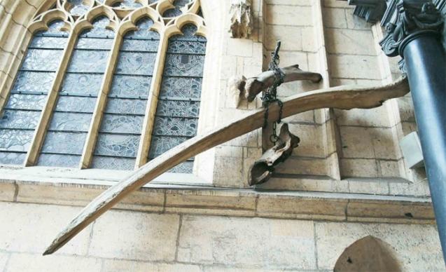 Wawel bones
