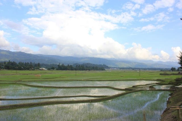 IMG_7564 Ziro paddy fields