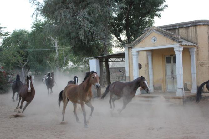 Nawalgarh Roop Niwas Kothi horse safaris IMG_1745_Anurag Priya