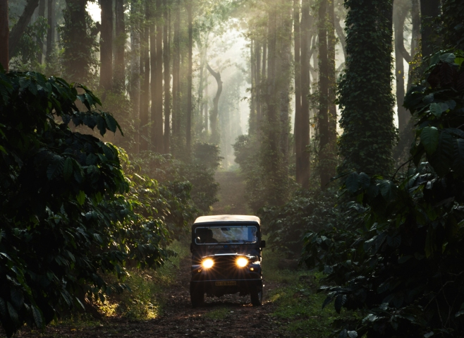 Guided Jeep Drive Through Coffee Plantations