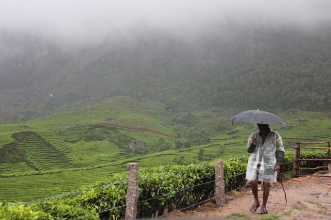Munnar monsoon IMG_8985_Anurag Priya