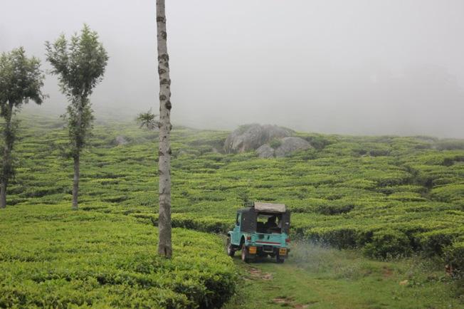 Tea Nest Coonoor offroad to Pakkasurankote IMG_2450