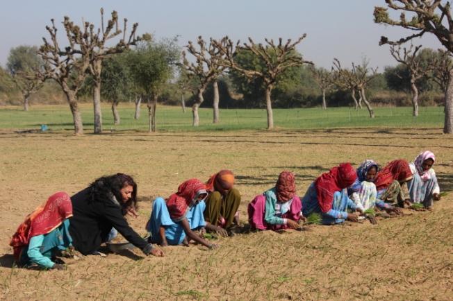 Shekhawati Agri-tourism holidays-planting onions IMG_0891