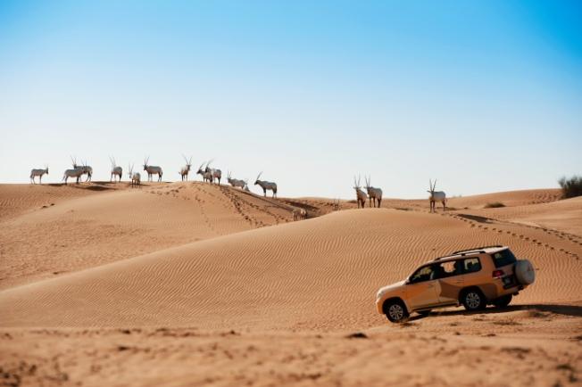 dubai-wildlife-drive
