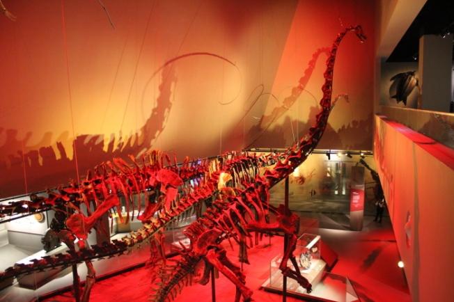 Lee Kong Chian Natural History Museum Singapore IMG_9980_Anurag Mallick