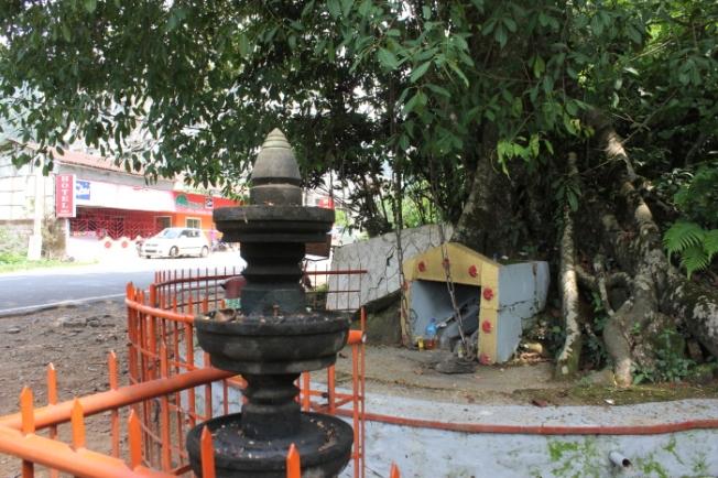 Chain Tree Lakkidi IMG_7274_Wayanad-Anurag Mallick