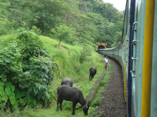 Konkan Railway DSC04711