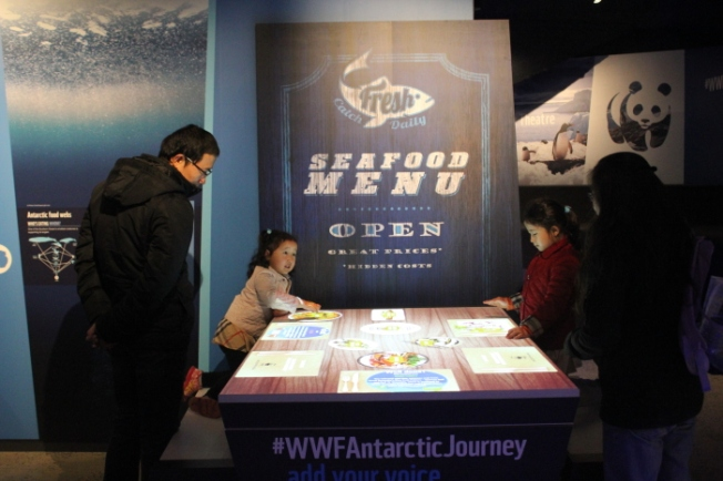 Antarctic Journey IMG_5650_Phillip Island-Anurag Mallick