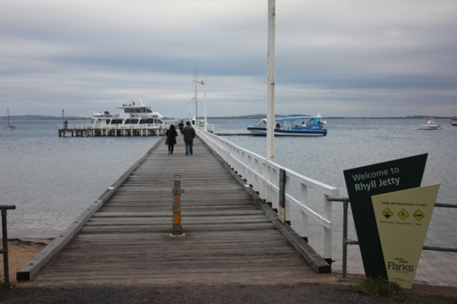 Eco Boat Tour from Rhyll Jetty IMG_5776_Phillip Island-Anurag Mallick