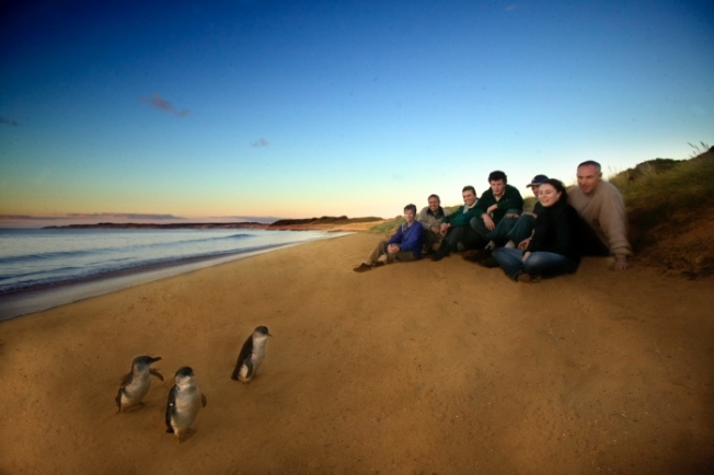 Penguin Parade Ultimate Tour_Phillip Island-Anurag Mallick