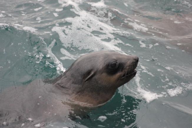 Seal Rocks IMG_5814_Phillip Island-Anurag Mallick