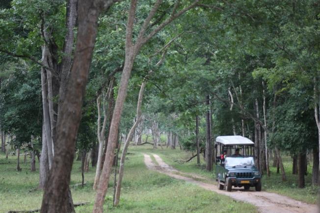 Kabini jeep safari 2017-09-21 17.17.18
