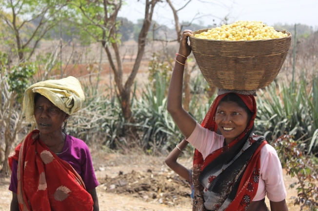 Women in Chhattisgarh collecting mahua flowers IMG_6515