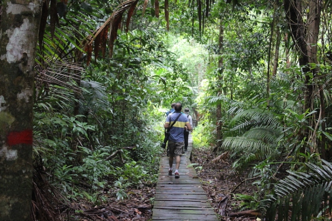 Bako National Park-Nature walk trail IMG_5713