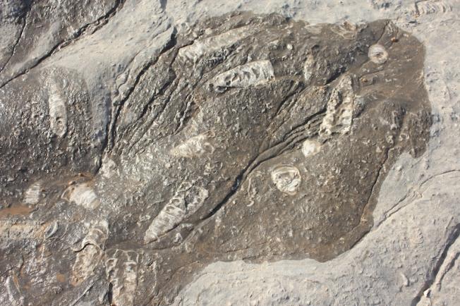 Musandam Fossil hunting IMG_0826