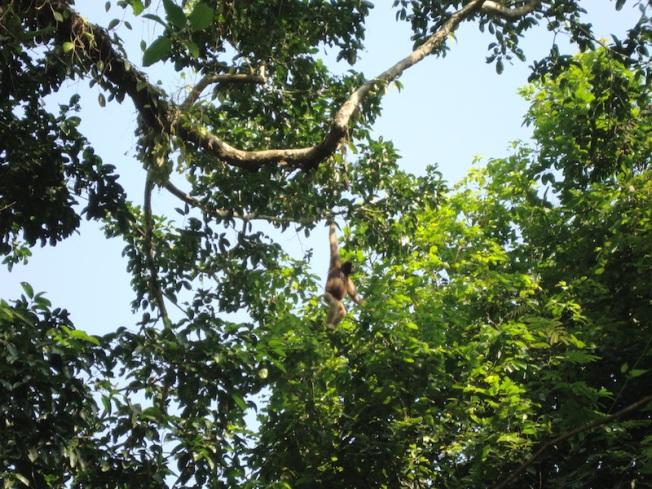Gibbon Sanctuary DSC04166