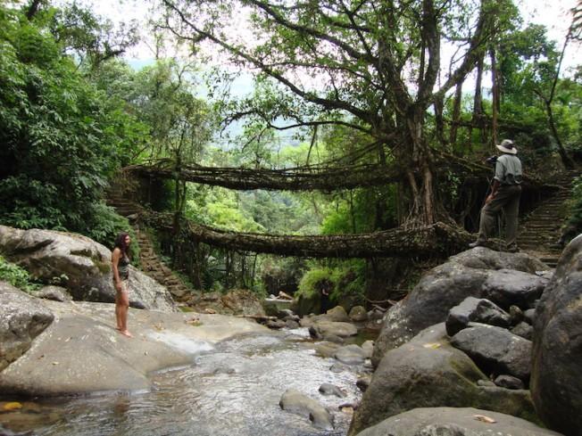Living Root Bridges of Meghalaya DSC01602
