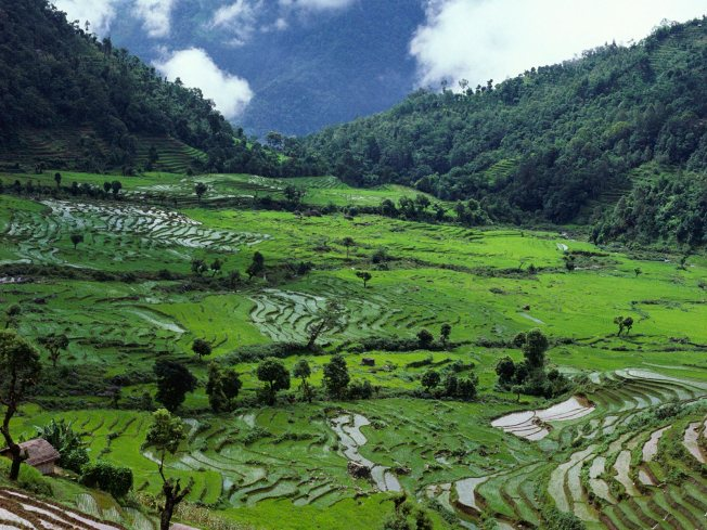 sikkimfarm2